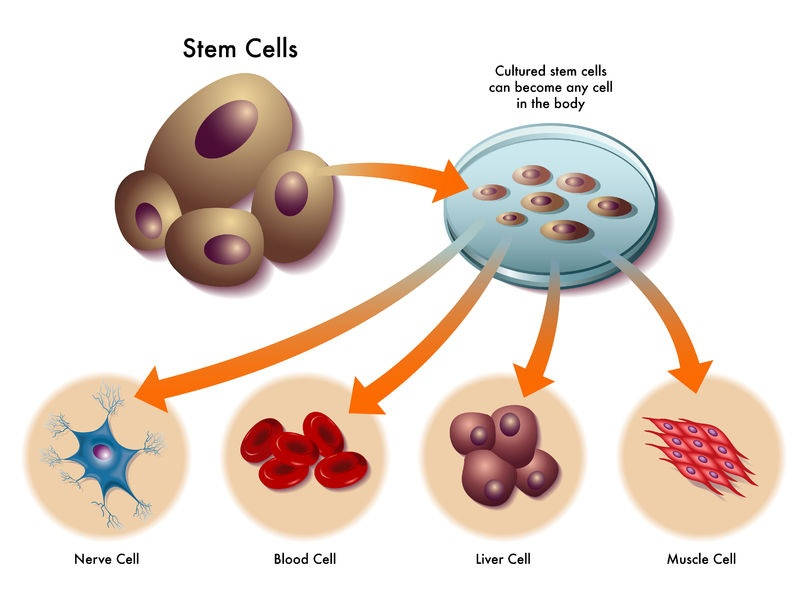 Stem Cell Therapy For ED - How it Works